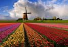 viza_v_Niderlandyi